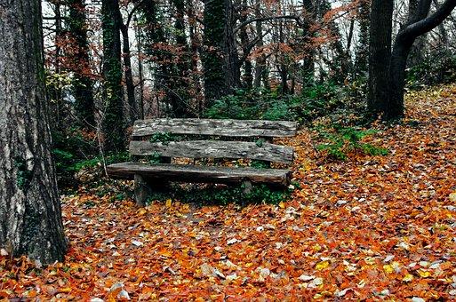 Autumn, Scape, Forest, Privacy, Nature, Wood, Park