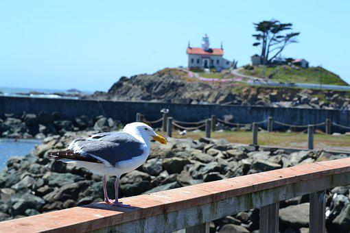 Crescent, City, Lighthouse, Seagull