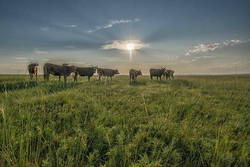 Landscape, Mongolia, Dornodo, Steppe, Caws, Morning