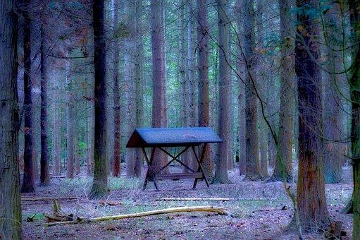Pine Forest, Coniferous Forest, Fodderhus