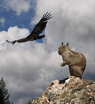 Squirrel, Danger, California Condor, Bird Of Prey