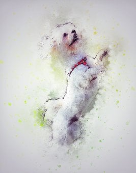 Dog, Pet, White, Art, Abstract, Vintage, Design