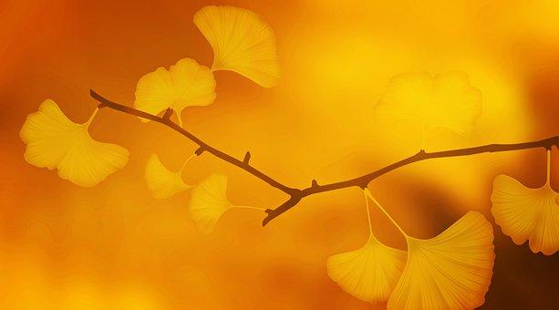 Texture, Background, Ginkgo, Ginkgo Leaves, Branch