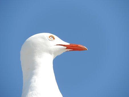 Seagull, Seabird, Bird, Gull, Nature, Sea, Seaside