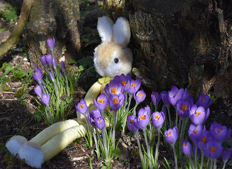 Hare, Toys, Easter, Spring, Cute, Gift, Easter Gift