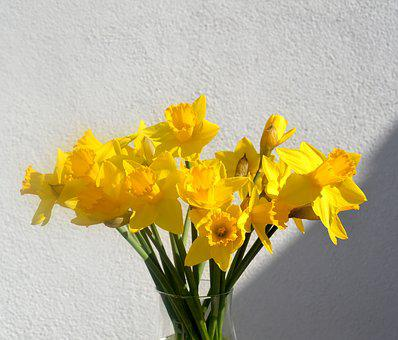 Daffodils, Osterglocken, Yellow, Spring, Blossom, Bloom