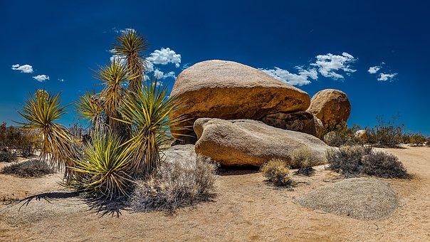 Usa, California, Yoshua Tree National Park, Rock
