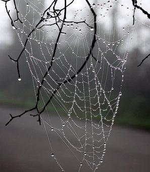 Web Spider, Dew, Winter Tree, Wire, Nature
