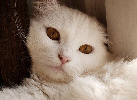 Cute, Pet, Cat, Portrait, White, Animal, Kitty
