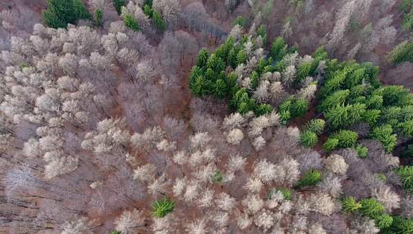 Who Was A, Aerial View, Forest, Mountain, Above, Top