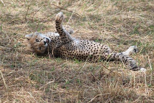 Africa, Safari, Tanzania, Bush, Mammal, Wildlife