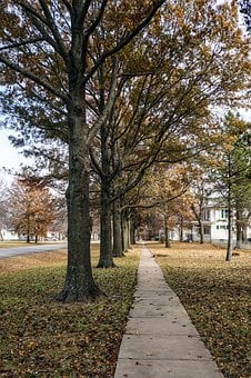 Sidewalk, Fall, Autumn, Small Town, Trees, Line, Path