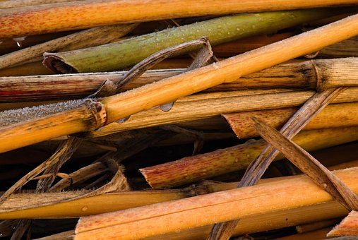 Straws, Scapes, Bamboo, Rime, Drops, Dry, Dew, Macro
