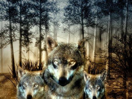 Wolf, Forest, Puppies, Wild Animal, Hunter, Carnivores