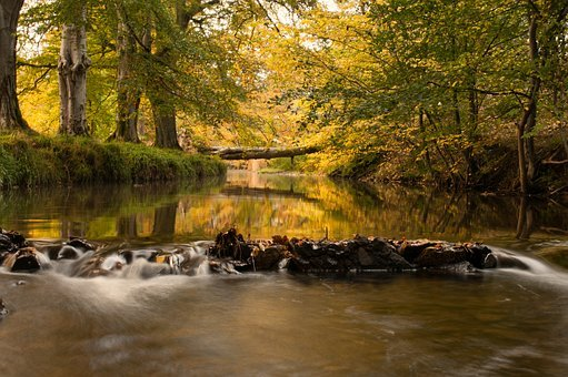 River, Cutler Water, Water, Autumn, Tree Bridge, Bridge