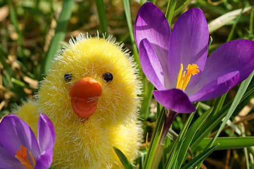 Spring, Easter, Chicken, Happy Easter, Decoration, Deco