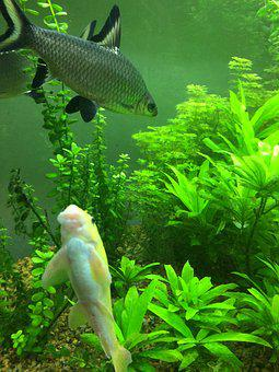 Fish, Fish Tank, Coral, Aquarium, Fishbowl, Water, Tank