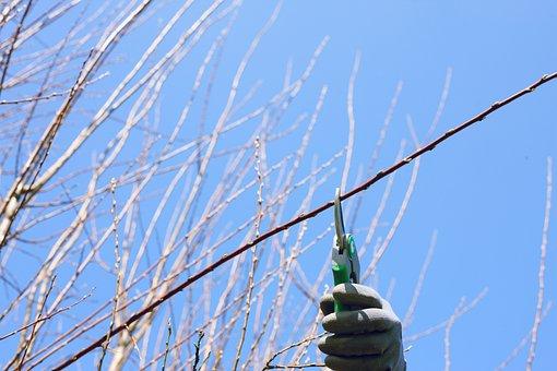 Bud, Pruning Shears, Gardening, Cut Hedges, Pruning