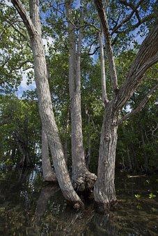 Arboretum, Mangrove, Widi Islands, Seawater, Tropical