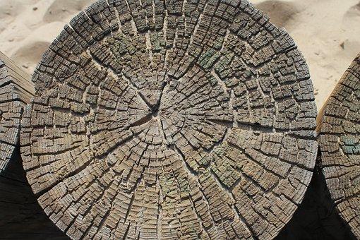 Tree, Structure, Texture, Beach, Design, Nature