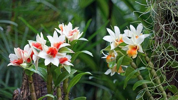 Orchid, Botanical Garden, Singapore, Plant, Tropical
