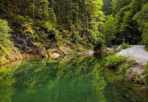 Landscape, Trees, Green, Forest, Water, Nature, Road