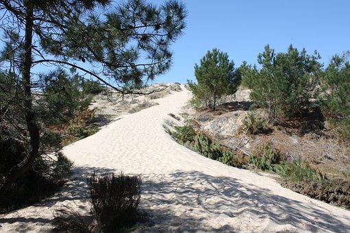 Sand, Pine, Landscape, Path