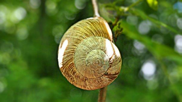 Green, Conch, Nature, Snail, Macro, Mollusk, Spiral