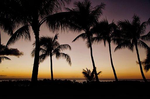 Sunset, Hawaii, Sun, Palm, Palms, Palm Trees, Trees