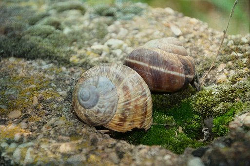 Snail, Stone, Shell, Green, Helix, Animal, Nature