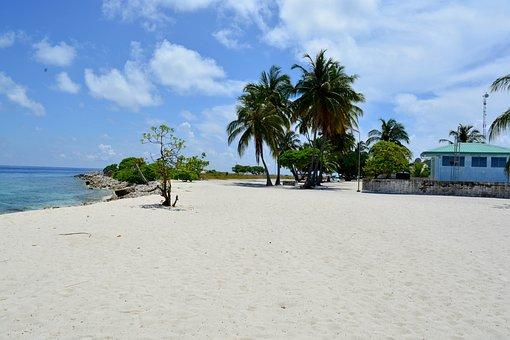 Palm Tree, Beach, Baa, Dharavandhoo, Maldives, House