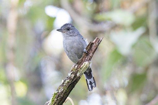 Bird, Nature, Tropical Birds, Birdie, Bird On A Branch