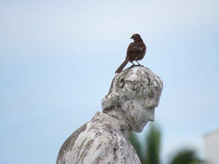 Fraga, Bird On The Statue, Bird, Image, Photo