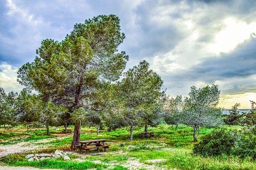 Copse, Trees, Nature, Forest, Landscape, Coppice