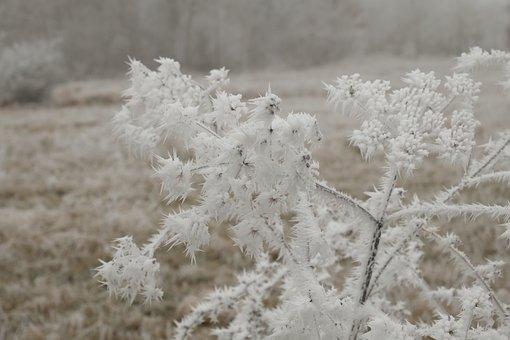 Winter, Wintry, Eiskristalle, Cold, Hoarfrost, Mood