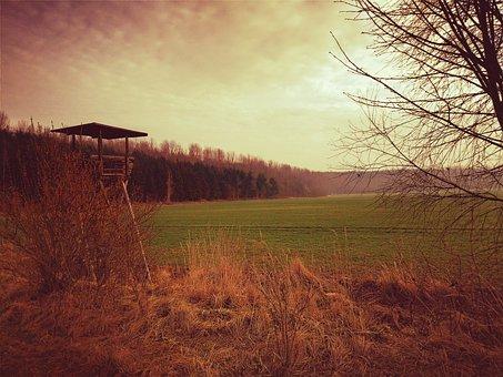 Forest, Hunt, Perch, Delight, Wild, Morgenstimmung