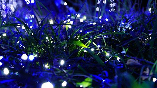 Night View, Light Festival, One Rumiah, Bokeh, Grass