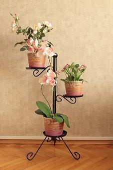 Flower, Vase, Jardiniere