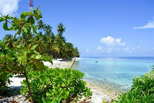 Beach, Palm Trees, Seascape, Maldives, Dharavandhoo