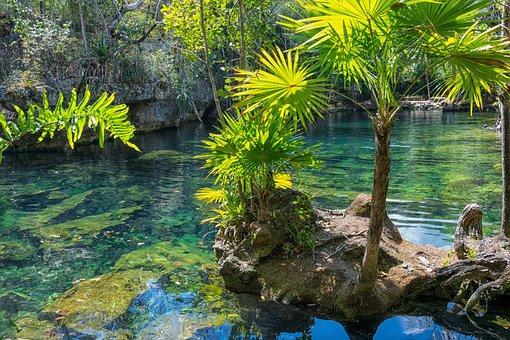 Mexico, Yucatan, Cenote, Nature, Summer, Travel