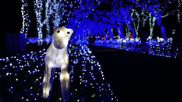 Night View, Light Festival, One Rumiah