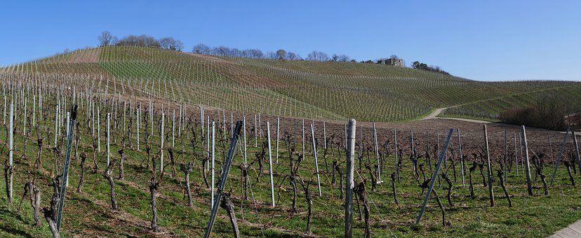 Panorama, Vineyards, Vines, View, Outlook, Winter