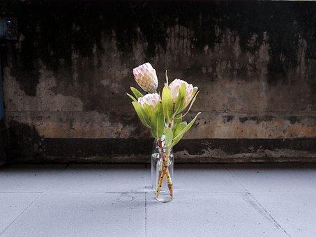 King Protea, Flower, Vase, Plant, Flowering