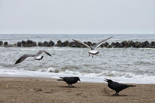 Animal, Sea, Beach, Sea Gull, Seabird, Wild Animal