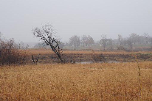 Tilted, Tree, Bog, Nature, Fog, Gray, Grey, Orange