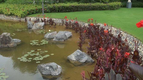 Shenzen, Water Lily, Goldfish, Brown Red, Garden