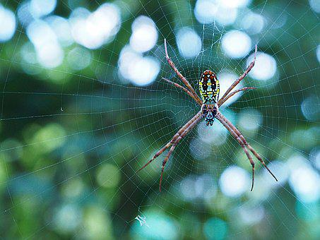Spider, Bug, Insect, Legs, Scary, Spiderweb, Macro