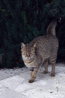 Cat, Pet, Friend, Fluffy, Kitten, Cute, Animal