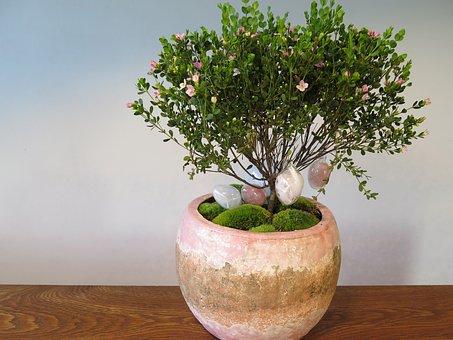 Flower, Plant, Easter Eggs, Pink, Decoration, Blossom