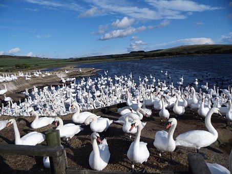 South Gland, Dorset, Lyme Regis, Uk, England, Ocean